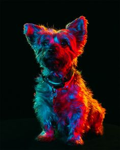 Photographer Captures Psychedelic Dog Portraits That Are Saving Animal Lives - UltraLinx