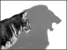 cat shadow ombre lion