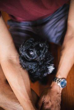 Cockapoo For Sale Puppy Minneapolis Minnesota Iowa