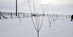 Când se fac tăierile la pomi? | Paradis Verde