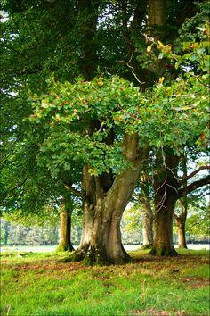Image result for trees at Glenstal images