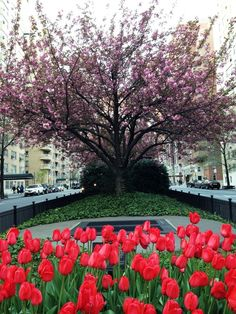 Park Ave. Upper East Side, Park Avenue, Perfect Place, Manhattan, New York City, Nyc, Places, Inspiration, Instagram