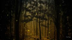 visuals of fireflies in the night - Google Search