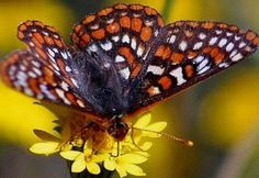 Great Public domain image - free picture of butterfly butterflies bugs flowers picture Beautiful Butterflies, Beautiful Flowers, Beautiful Pictures, Bugs, Sensory Garden, Christian Wallpaper, Butterfly Pictures, Butterfly Kisses, Dream Garden