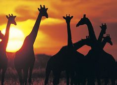 Have a blast in #Botswana, one of Africa's most beautiful and alluring destinations. #ysbh http://ow.ly/IaRic