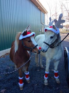 Cute little Christmas pony reindeer!