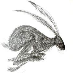 Hare running drawing - photo#11
