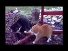 TOP Funny Cat Fails Try not to Laugh ✮ Most Popular ✮ New and Funniest - http://positivelifemagazine.com/top-funny-cat-fails-try-not-to-laugh-%e2%9c%ae-most-popular-%e2%9c%ae-new-and-funniest/ http://img.youtube.com/vi/HPNoTVRVBsU/0.jpg  TOP Funny Cat Fails Try not to Laugh ✮ Most Popular ✮ New and Funniest. TOP Funny Cat Fails Try not to Laugh ✮ Most Popular ✮ New and Funniest. ***Get your free domain and free site builder*** Click to Surprise me! Please follow