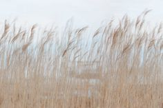 Swaying Reed | R13602 | Rebel Walls EN-US