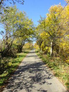Duna-Ipoly Nemzeti Park - piękne lasy w pobliżu Budapesztu - Turkusowa Kropka Lasy, Paths, Sidewalk, Country Roads, Dune, Side Walkway, Walkway, Walkways, Pavement
