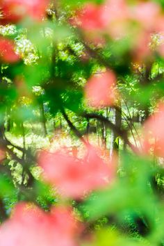 José Ginarte writes about a series of photographs by the Japanese photographer Yoshinori Mizutani that capture shinrin-yoku, or forest bathing. Shinrin Yoku, Forest Bathing, The New Yorker, Photo Booth, Favorite Color, Dandelion, Mystery, Abstract Art, Japanese