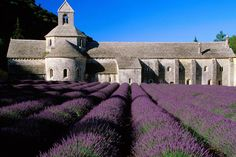 Lavendar Fields of Provence France: 10 Colorful places to visit Grasse France, La Provence France, Aix En Provence, Provance France, Luberon Provence, Lyon France, Places In Europe, Places To Travel, Places To See