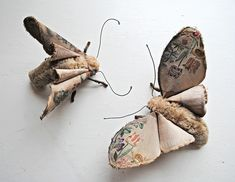 open-winged-moth-and-sister-large-1024x794