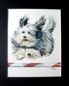 Sonrisas Havanese Puppies- rita@sonrisashavanese.ca