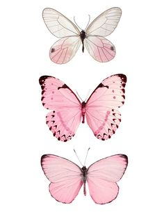 Butterfly Illustration, Butterfly Drawing, Pink Butterfly, How To Draw Butterfly, Butterflies, Butterfly Design, Butterfly Wallpaper Iphone, Pink Wallpaper, Photographie Portrait Inspiration