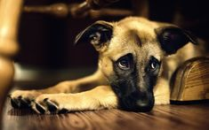 How to REALLY tell if your dog is uncomfortable or in pain!