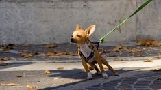 Improving your dog's leash skills is about using brains, not brawn. There are plenty of…