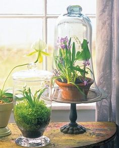 Glass bell jars (cloche)- 2 available $15 rental