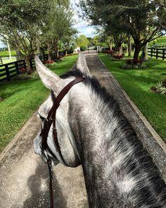 ΩOne day we will be remembered Ω Pretty Horses, Horse Love, Horse Ears, English Riding, Horse Photos, Horse Photography, Horse Riding, Nice View, Beautiful Creatures