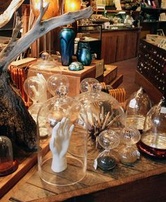Natural Curiosities, Oddities and More at Paxton Gate