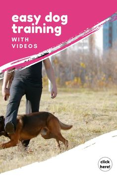 Get 200+ Dog Training Videos You can save a lot of money & time by watching great dog training videos… Do you know how much does dog training cost? #dogtrainingvideos #puppytrainingvideos #dogtraining #puppytraining