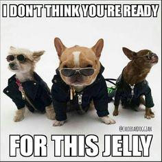 dog イヌ 犬可愛い画像まとめ http://ift.tt/1rWm2pR