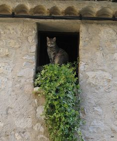 The French Cat; chat (m), chatte (f). Animal Gato, Amor Animal, Crazy Cat Lady, Crazy Cats, I Love Cats, Cute Cats, Cat Window, Window Boxes, Gatos Cats