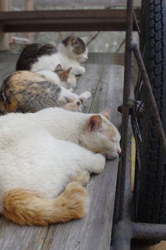 青島のねこです。リアカーがベッドですね。