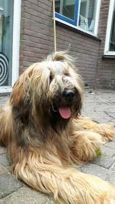 Big Dogs, Large Dogs, Dogs And Puppies, Cute Dogs, Large Dog Breeds, Beautiful Dogs, Dog Days, Animal Photography, Animals And Pets