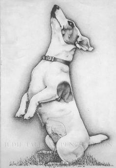 Jack Russel Drawing - Commissioned Pet Portrait Drawing in Pencil, Pet Portrait Commissions Taken.