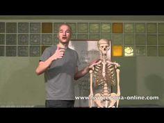 Disfunciones del Riñón. Causas, consecuencias musculoesqueléticas y tratamiento.