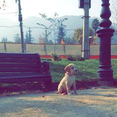 In Parque.