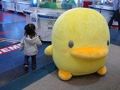 Piyo-chan. WANT SO BAD! Cuddles! :D #kawaii
