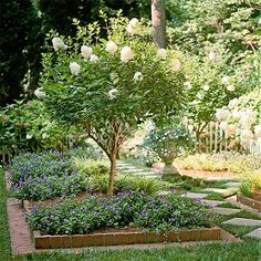 Find out which hydrangeas are the best bets for your yard
