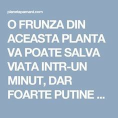 O FRUNZA DIN ACEASTA PLANTA VA POATE SALVA VIATA INTR-UN MINUT, DAR FOARTE PUTINE PERSOANE STIU CUM SA O FOLOSEASCA!