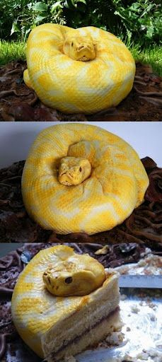 A slice of snake cake anyone? ;)