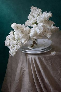 http://nikolay-panov.pixels.com/products/snow-white-lilacs-nikolay-panov-art-print.html Floral still life photography with simple composition of lush bouquet of snow white blooming lilacs in glass vase on crumpled folded drape on blue background in daylight in spring