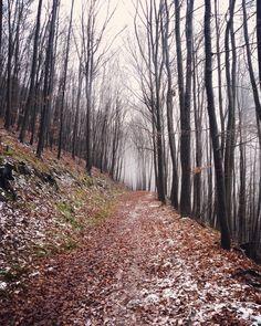 #naturelovers #mist #forest #walking #together #klubkocestuje #famillytrip Mraky se nám válely po cestě a pršelo, ale to nám ani mamině nevadí!❄️