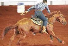 Resultado de imagem para cavalos quarto de milha