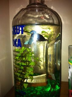 For all the left over vodka bottles. DIY Betta Bottle Fish Tank | without the stupid comment from girls I don't know