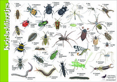 Herkenningskaart / zoekkaart Kriebeldiertjes #bij #kever #spin #worm #duizendpoot #wesp Nature Journal, 5 Year Olds, Animals Of The World, Fauna, Science For Kids, Early Learning, Staycation, Toddler Activities, Garden Design