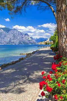Science Discover Malcesine Lake Garda Italy is part of Beautiful places - Malcesine Lake Garda Italy Italy Vacation Vacation Spots Italy Travel Vacation Travel Italy Trip Vacation Places Wonderful Places Beautiful Places Romantic Places Italy Vacation, Italy Travel, Vacation Travel, Italy Trip, Places To See, Places To Travel, Vacation Places, Vacation Spots, Wonderful Places