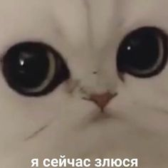by МЕМЫ ❌ Memes Humor, Cat Memes, Funny Memes, Russian Cat, Russian Memes, Funny Animal Memes, Funny Cats, Funny Animals, Stupid Pictures