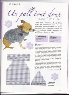 Image - si vous avez envie de tricoter un pull pour votre chichi - Blog de chienchilla442 - Skyrock.com