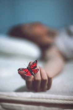 """simply-beautiful-world: """"p>❥‿↗⁀simply-beautiful-world """" Butterfly Effect, Butterfly Kisses, Madame Butterfly, Butterfly Art, Black White Photos, Black And White Photography, Simply Beautiful, Beautiful World, Beautiful Morning"""