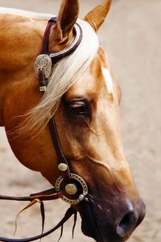 Palomino with beautiful bridle.