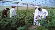 Saudi Agriculture '14 gains global interest on food sustainability  Saudi Arabia has initiated a drive to encourage business to invest in farming operations abroad, which could see the Kingdom improve its food security as well as increase investment opportunities.   http://www.ebctv.net/economics-business/saudi-agriculture-14-gains-global-interest-food-sustainability/