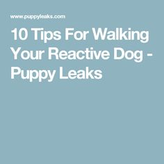 10 Tips For Walking Your Reactive Dog - Puppy Leaks