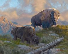 Morning Graze by Dustin Van Wechel - With a love of the great outdoors and a passion for wildlife, Van Wechel allows us to observe the animals in their natural landscape. These two bison take advantage of the cooler temperatures to forage for food. The largest of the bison appears to scan the horizon....perhaps he senses something in the air.