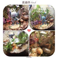 DIY苔藓微景观之史迪仔5